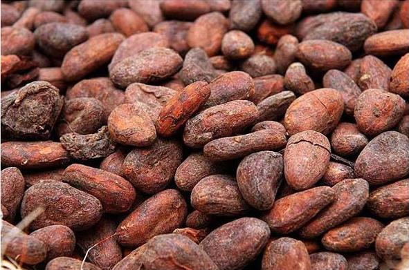 Doplňková Výživa - Kakaové boby Trinitario (Madagaskar) - Menakao 2,5KG